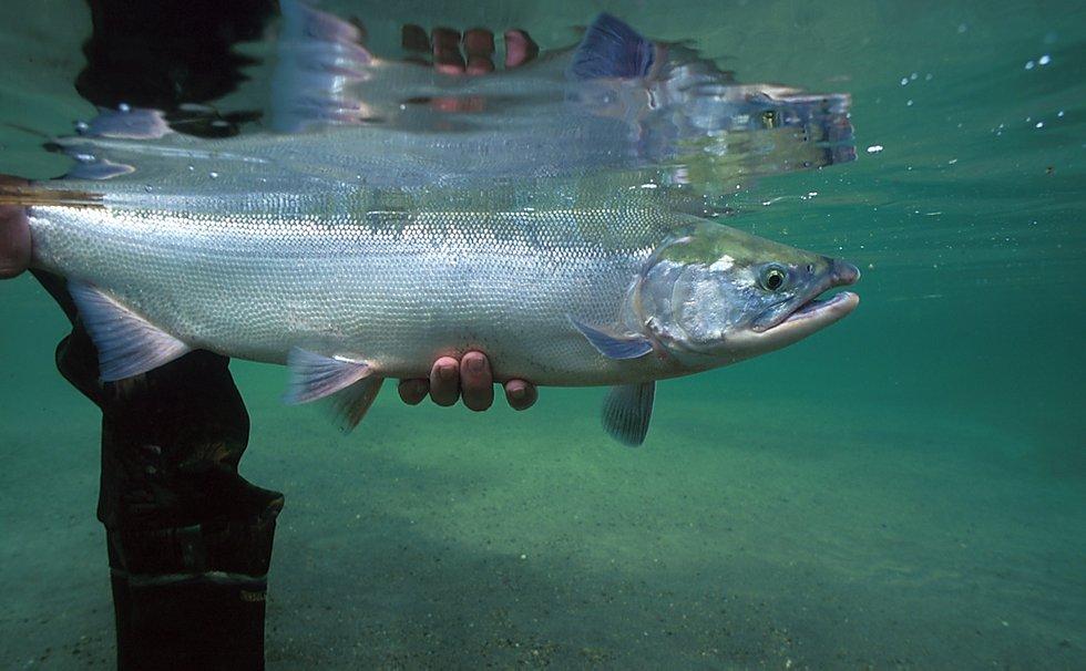 half-day-salmon-fishing